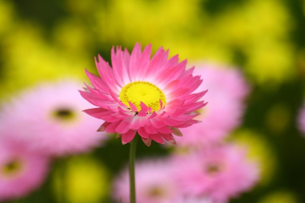 Kings Park wildflowers series 3