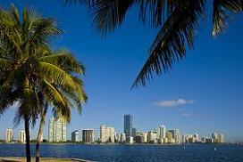 city_palms_w