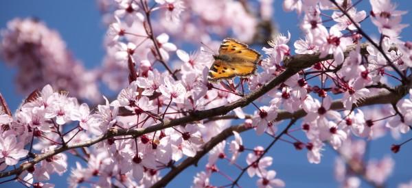 První máj, lásky čas i v zahraničí :-)