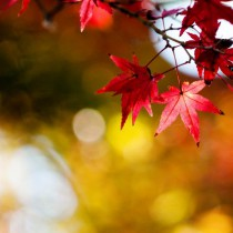 podzim7